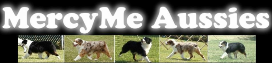 MercyMe Miniature American Shepherds (Mini Aussies)